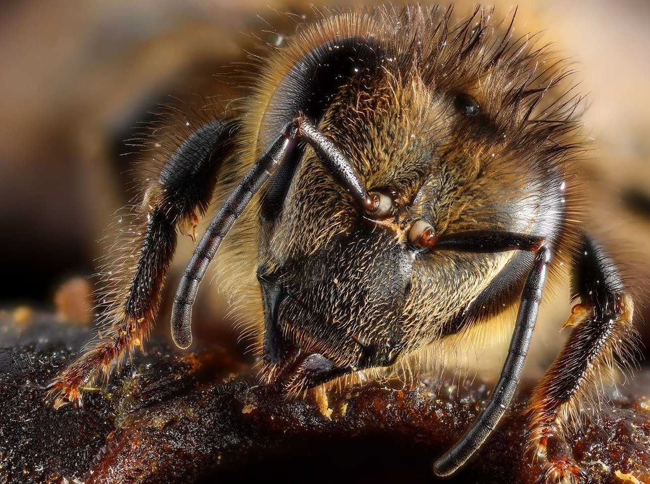 Understanding the way bees and ants communicate might make it easier to protect them in the future.
