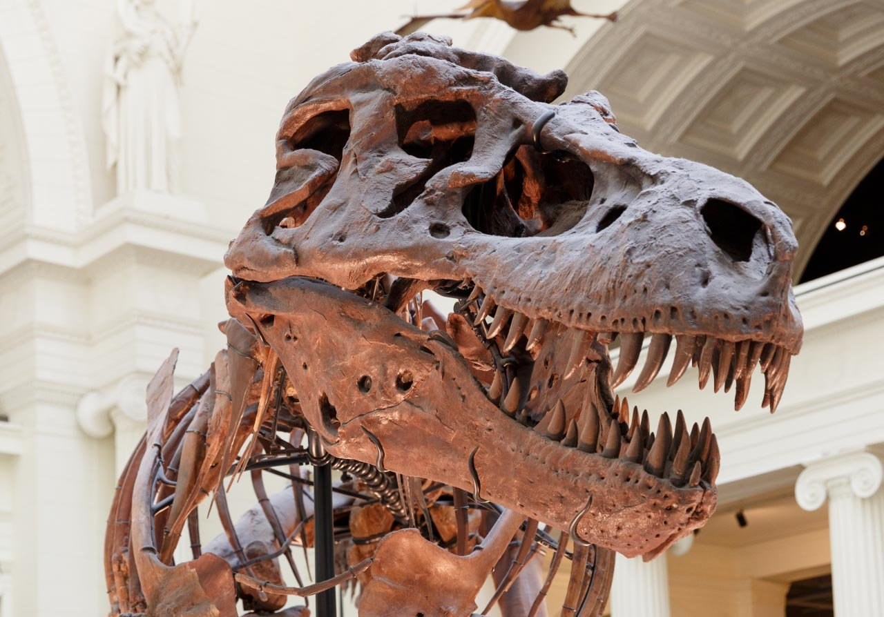 The extinction of the dinosaurs paved the way for today's mammalian diversity.